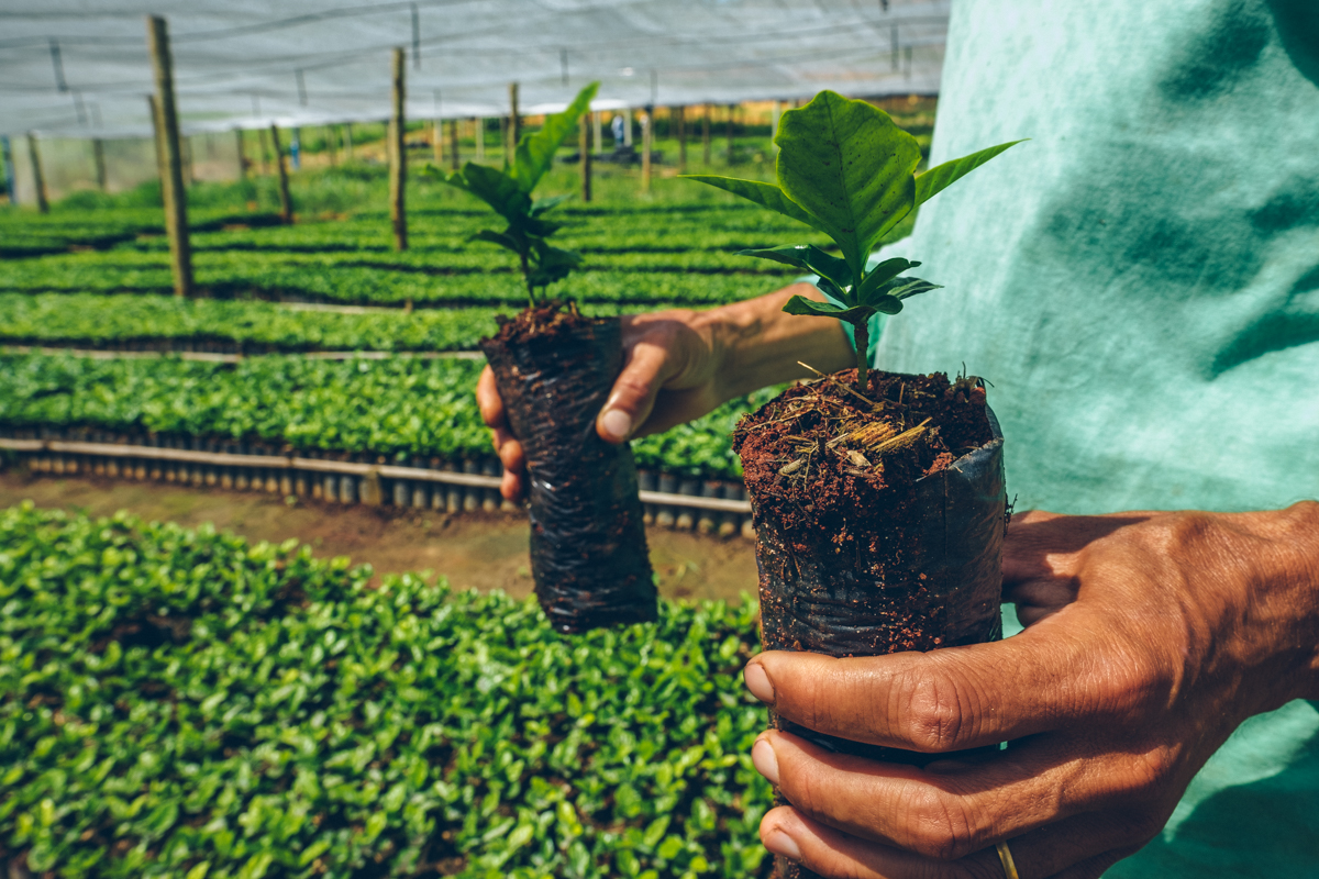 Justiça nega reintegração de posse de quilombo em Campo do Meio (MG)